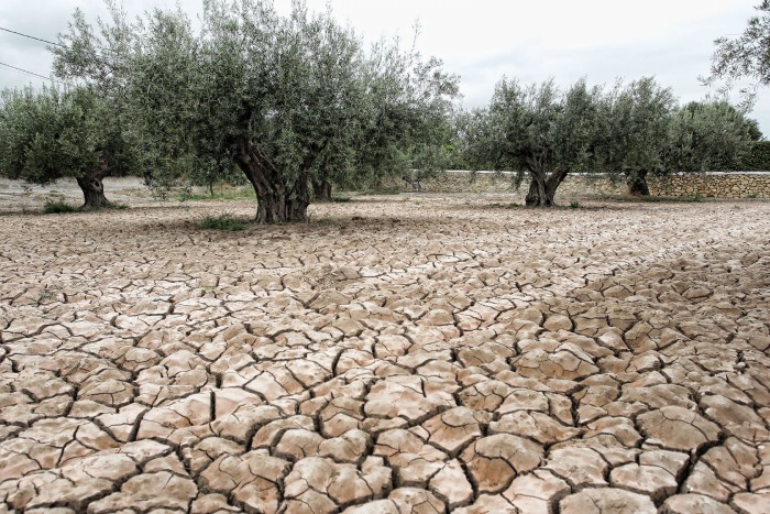 Terrenos afectados por la sequía | FOTO: hortainformacio.com